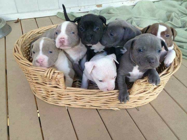A basket full of LOVE