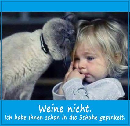 Euer Hans von der www.tue-taunus.de #AutoErlebniswelt #TüTaunus #Katzen
