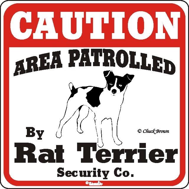 I love my Rat Terrier!