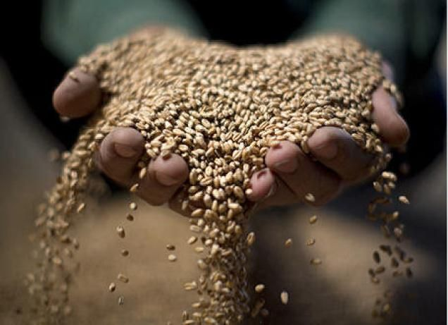 Wheat, rice basmati prices strengthen on increased buying | Business Line