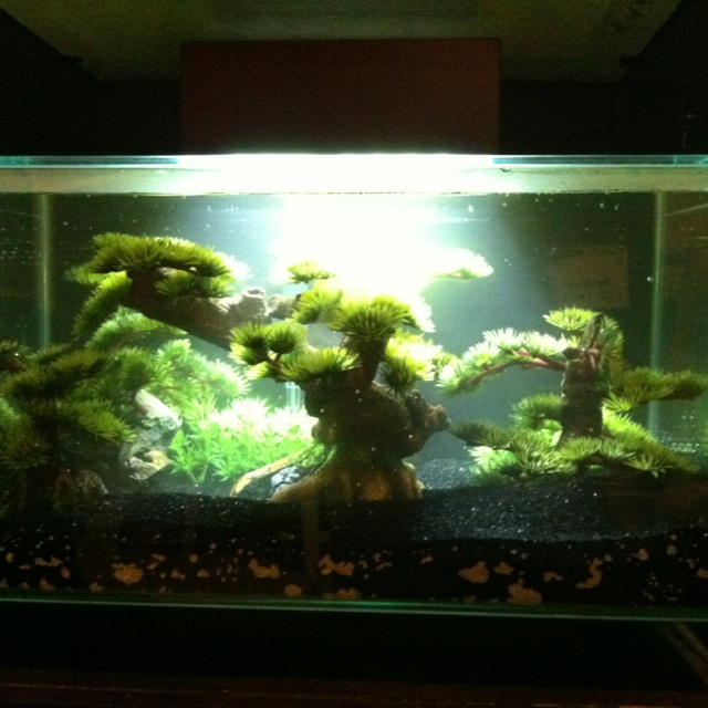 1000 images about cool fish tanks on pinterest odaiba for Fish tank bridge