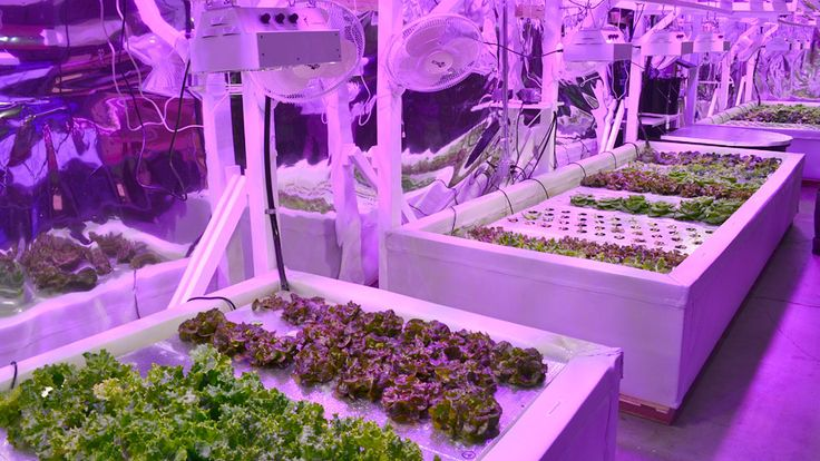 Meet us for the best Hydroponics Equipment in Kent - GroWorks