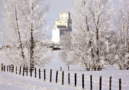Grain Elevator Seen Through Frost Covered Trees On A Saskatchewan Winter Day.