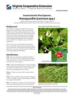 Cover, Invasive Exotic Plant Species: Honeysuckle (Lonicera spp.)