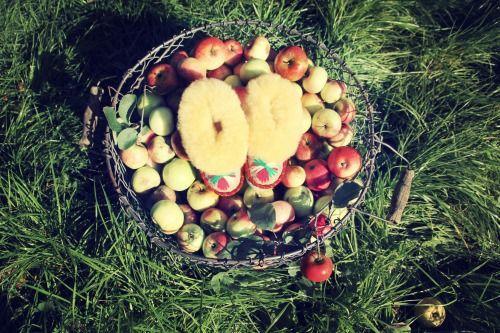 crab apple WOODLANDS www.mywoodlandsshop.com