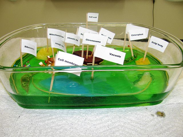 EDIBLE PLANT CELL PROJECT | Flickr - Photo Sharing!