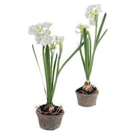 "Set of two faux narcissus bulb arrangements in handmade natural terracotta planters. Hand-assembled in the USA.  Product: Set of 2 faux floral arrangementsConstruction Material: Polyester, plastic and terracotta Color: WhiteFeatures: Hand-assembled in the USADimensions: 14"" H x 3"" Diameter eachCleaning and Care: Dust with a dry cloth"