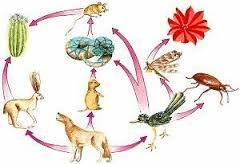 Resultado de imagen para cadena de comida de   los  animalesanimales