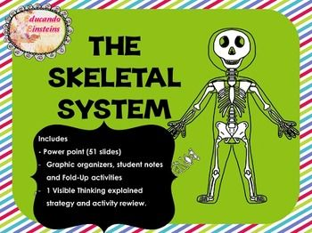 the skeletal system critical thinking and review questions Review and critical thinking help determine whether bones and skeletal remains are from a long ago burial or review + critical thinking questions.