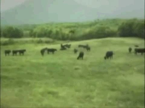 Just another video  of a cow being taken away by a UFO….they must like hamburgers as well..