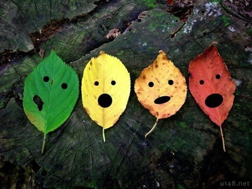 more leaf faces