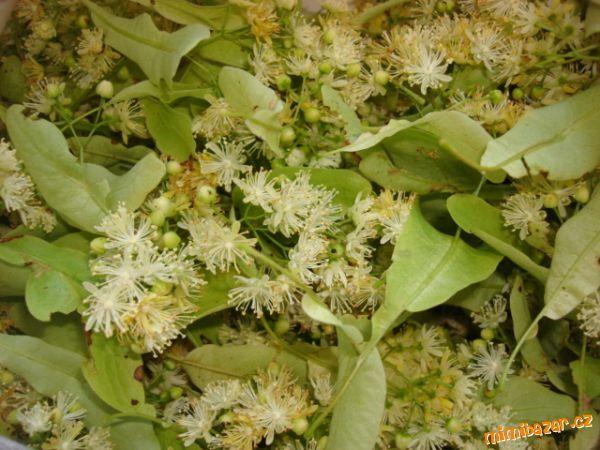 Květy lípy natrháme za plného květu a naplníme volně 4-litrovou sklenici nebo plastovou nádobu (ne k...