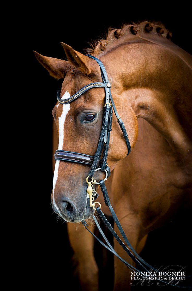 Pferdefotografie & Hundefotografie – Mit Liebe zu Pferde und Hunde – Unvergessliche Momente in Bildern festgehalten