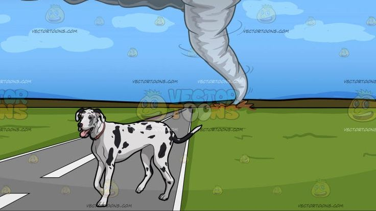 A Tired Dalmatian With A Tornado Background :  A tall dog with short white fur and black spots wearing a peach neck collar opens its mouth showing a pink tongue and A view of a tornado from afar destroying the green fields beyond the road from a distance