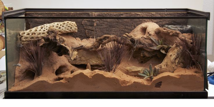 Zoo Med custom habitat with Excavator® Clay Burrowing Substrate.