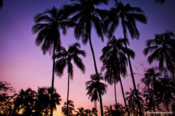 Palm Trees silhouetted against a purple sky in Tayrona National Natural Park, Colombia #travel
