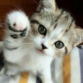 Hallo 🐅