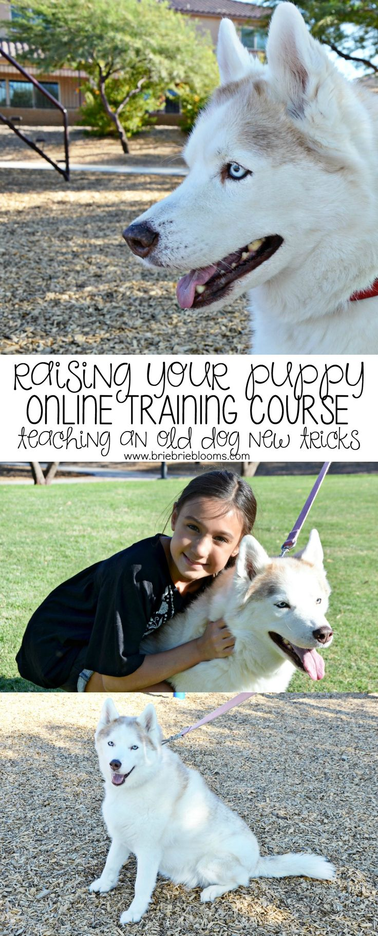 Robin K Bennett's Raising Your Puppy™ online dog training course is excellent for families with a new puppy or working on teaching an old dog new tricks. #raisingpuppy #ad
