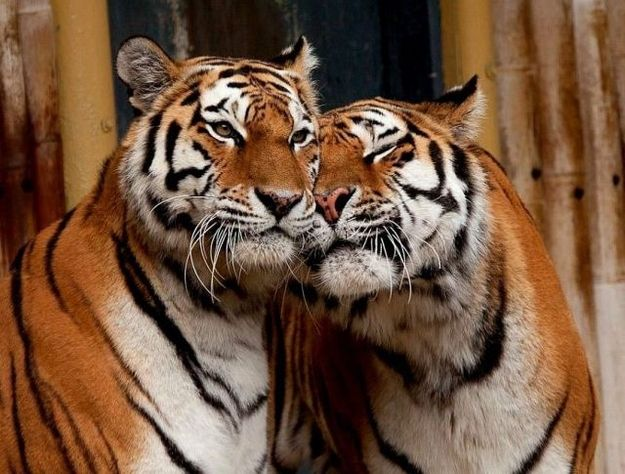 40 Animals in love...adorable.