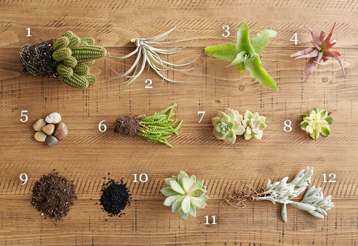 Terrarium Plants: How to Care for Succulents exclusively on Discover, a blog by World Market #DiscoverWorldMarket