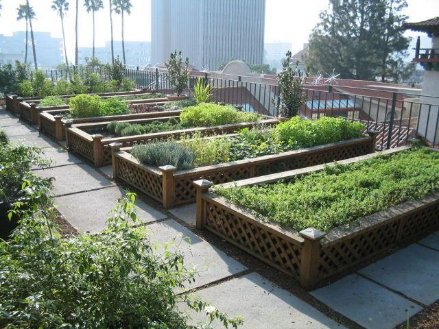 taman atap roof garden