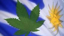 """""""El Poder Ejecutivo uruguayo legalizará la venta de marihuana y generará redes de distribución estatales. Habrá registros de consumidores y el precio de los cigarrillos incluirá impuestos. """""""