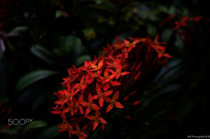 Red Flowers - null