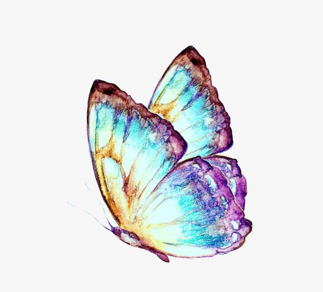 Watercolor Butterfly Png And Clipart Butterfly Watercolor Watercolor Butterfly Clip Art