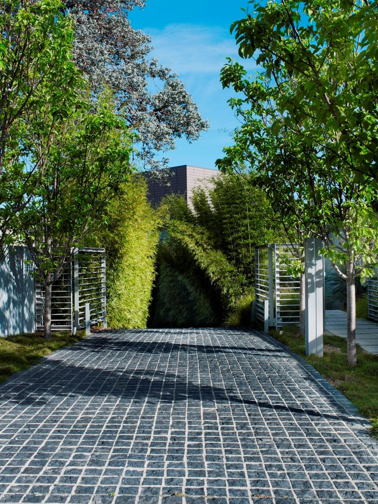 Driveway and Pyrus