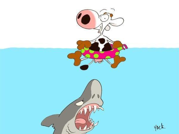 Les Vaches De Yack Vache Images Droles Requin