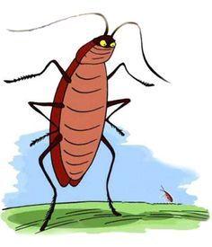 Veneno casero para matar cucarachas