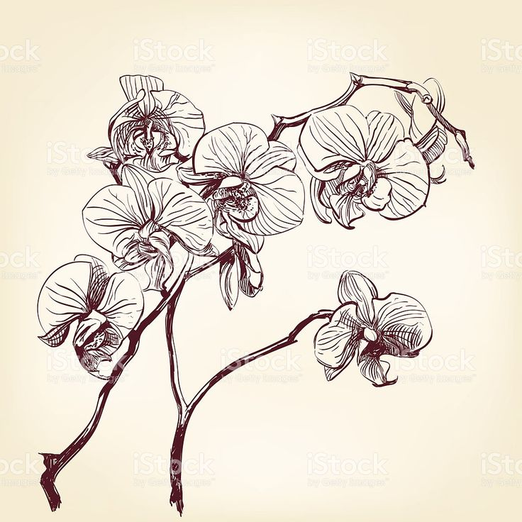 85 best flowers drawings of orchids images on pinterest orchid tattoo draw and orchids - Dessin d orchidee ...