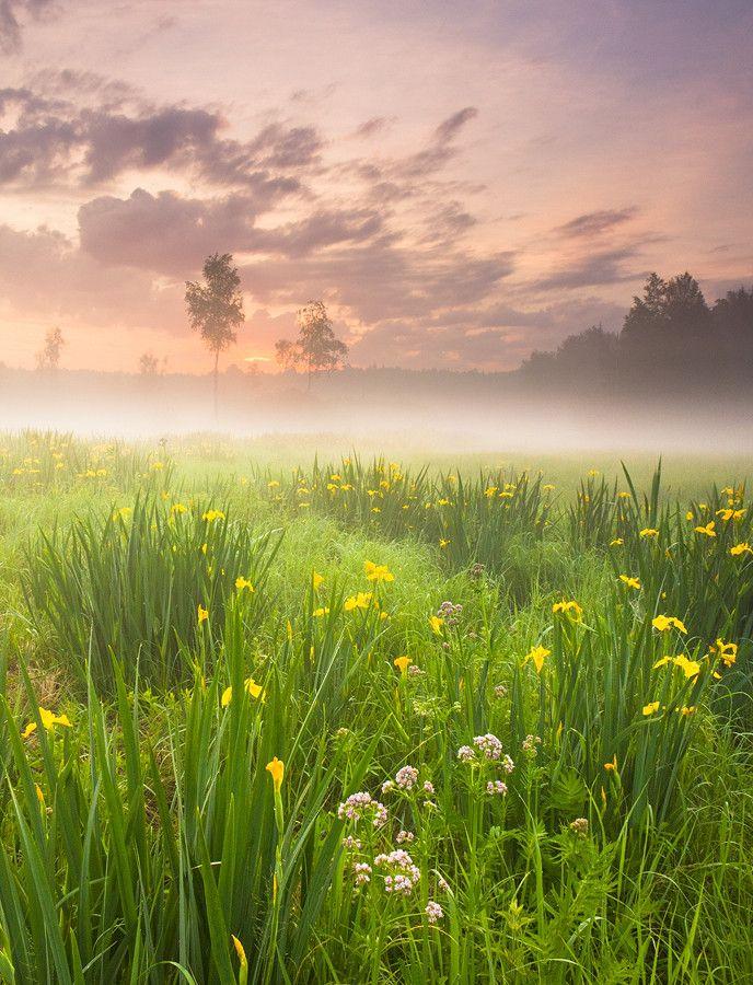 овощной шашлык красивая природа рассвет картинки носить