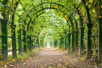 Fototapet 3D Tunel verde