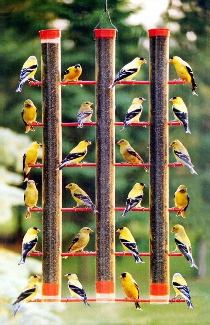 And finches must flock!  Finches Favorite 3 Tube Bird Feeder, $40.97 (http://www.bombaybongo.com/finches-favorite-3-tube-bird-feeder/)