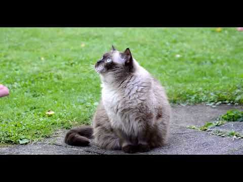 cute cat video - little kittens and cute cats compilation | funny pet videos #4 - http://www.funnyandcuteanimals.com/cute-cat-video-little-kittens-and-cute-cats-compilation-funny-pet-videos-4/