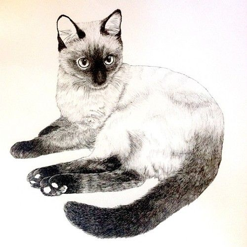 surrocodelia:  meow #workinprogress #cat #illustration