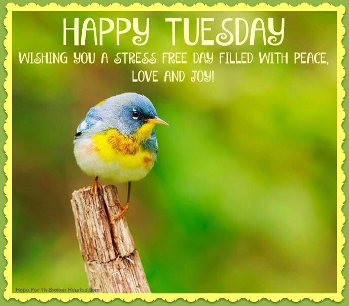 30 best happy tuesday images on pinterest happy tuesday tuesday have a happy stress free tuesday voltagebd Choice Image