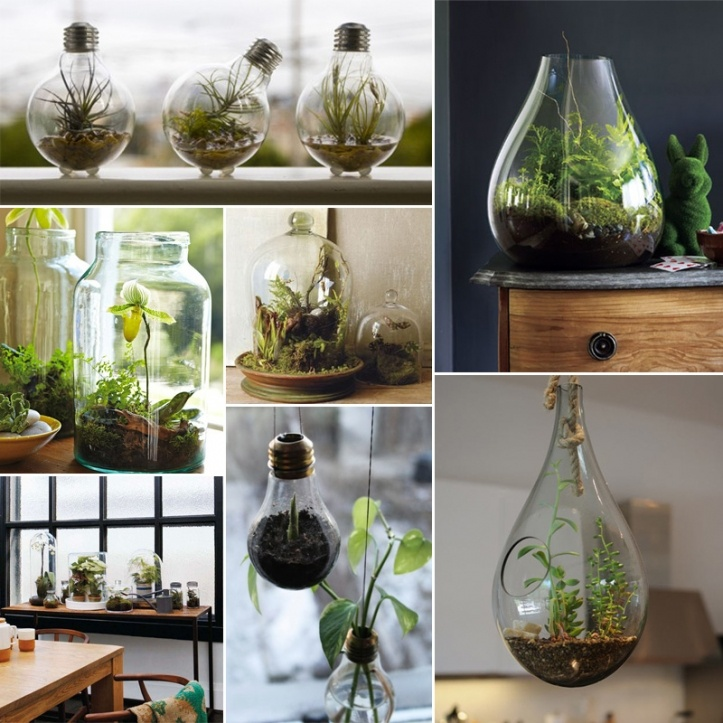 table top terrarium; hanging light bulb terrariums