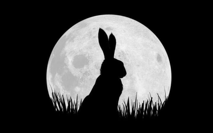 Animals don't behave like men' he said. 'If they have to fight they fight; and if they have to kill they kill. But they don't sit down and set their wits to work to devise ways of spoiling other creatures' lives and hurting them. They have dignity and animality. Vale #RichardAdams #WatershipDown