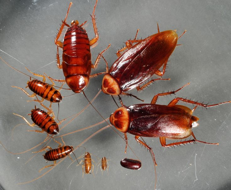 If you want to know further detail please visit at http://www.insightpestcontrol.com.au/
