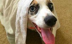 DIY Your Dog's Dandruff Shampoo To Combat Dry, Flaky Skin