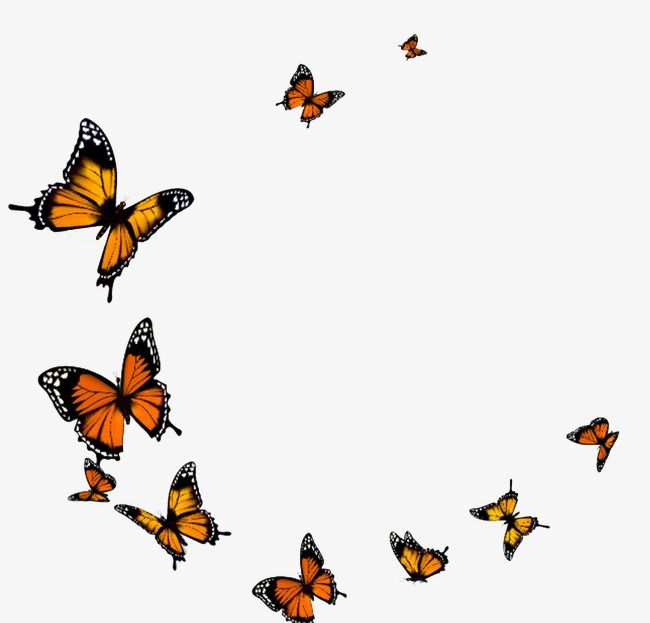 Pin By Gillian Markovich On Tattoos Butterflies Flying Butterfly Gif Transparent Background