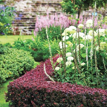 Irish garden design use an unusual plant japanese for Irish garden designs
