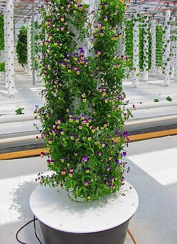 You don't just have to grow food in your Tower Garden, you can grow beautiful flowers as well - for those of you who are into that kind of thing.   www.new.towergarden.com