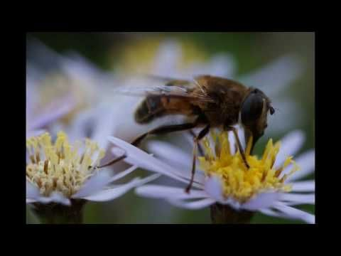 Sigma 105mm f/2.8 Macro DG OS HSM: Recensione e test - YouTube