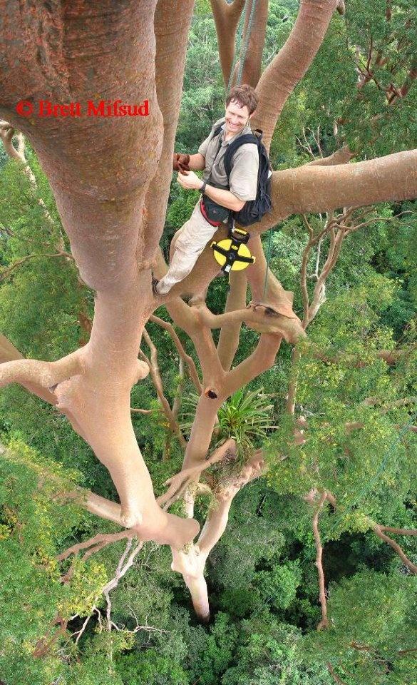 Wow that's really high up! At Tawau Hills Park, Sabah, MALAYSIA