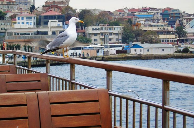 Boat with seagull.