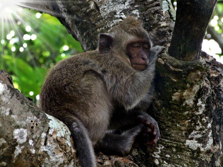 Fauna, Free Image, Free Photo, bby Monkey on the Tree, Thailand, Animals