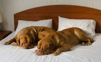 Find The Best Pet Friendly Hotel Chains